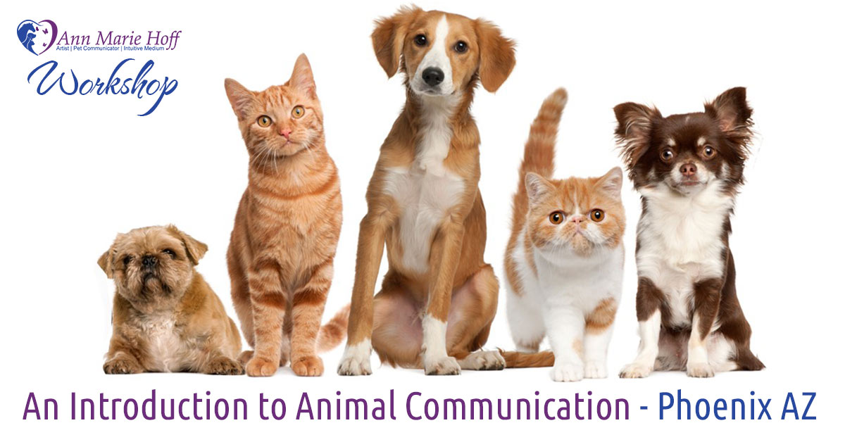 Animal Communication Workshop in Phoenix AZ